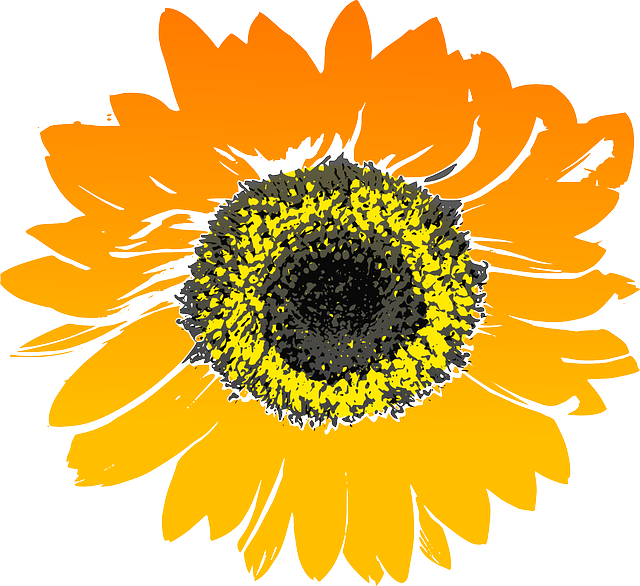 sunflower-147075_640.png